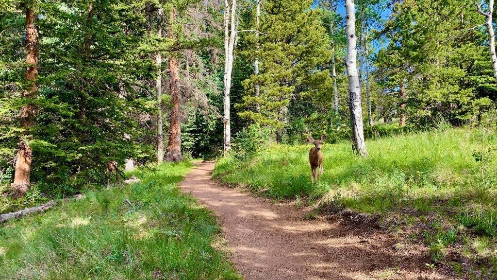 Deer waiting alongside the trail for me