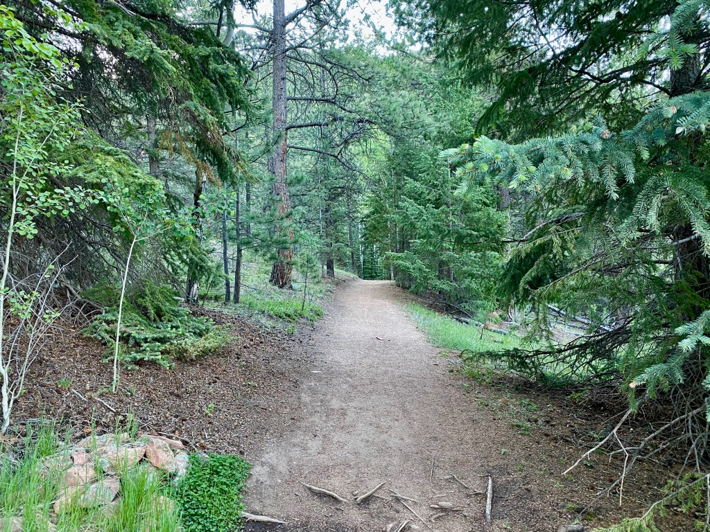 View of the heavily wooded trail