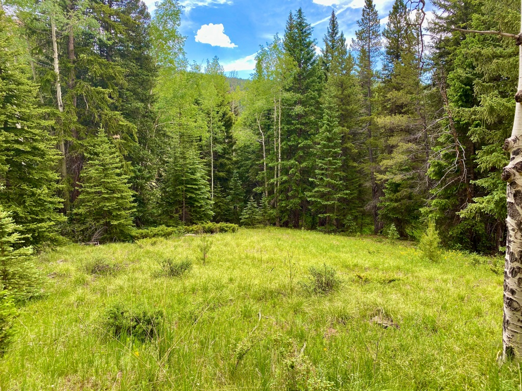 Lovely mountain meadow surrounded by pines and aspens