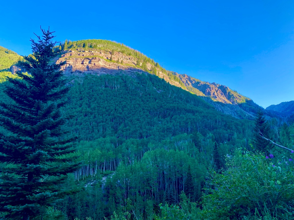 Mountain and cliffside covered in aspen trees